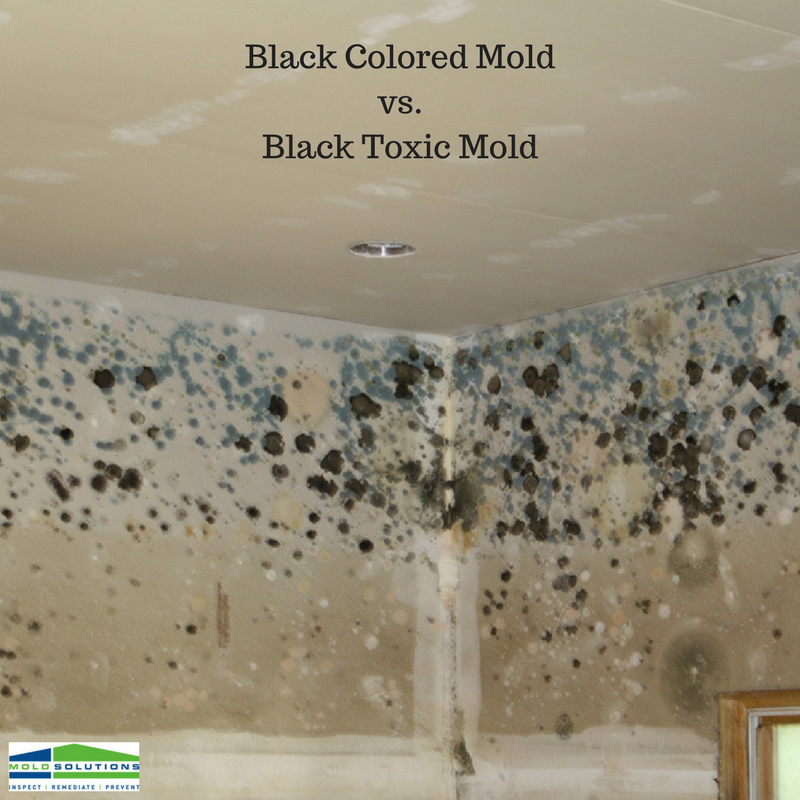 Black Colored Mold Vs Toxic