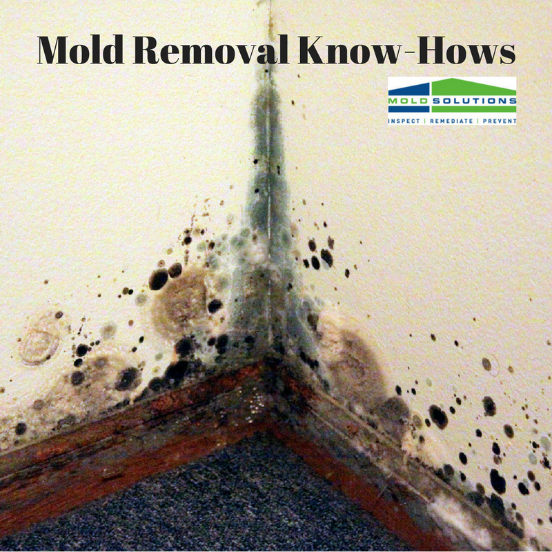 Mold Removal Know-Hows