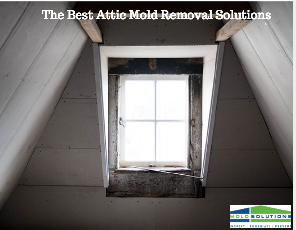 Attic Mold Removal Solutions