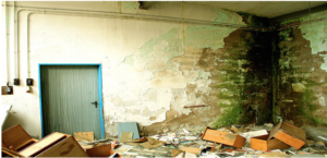 What Causes Mold Growth?