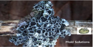 Common Types of Mold Image