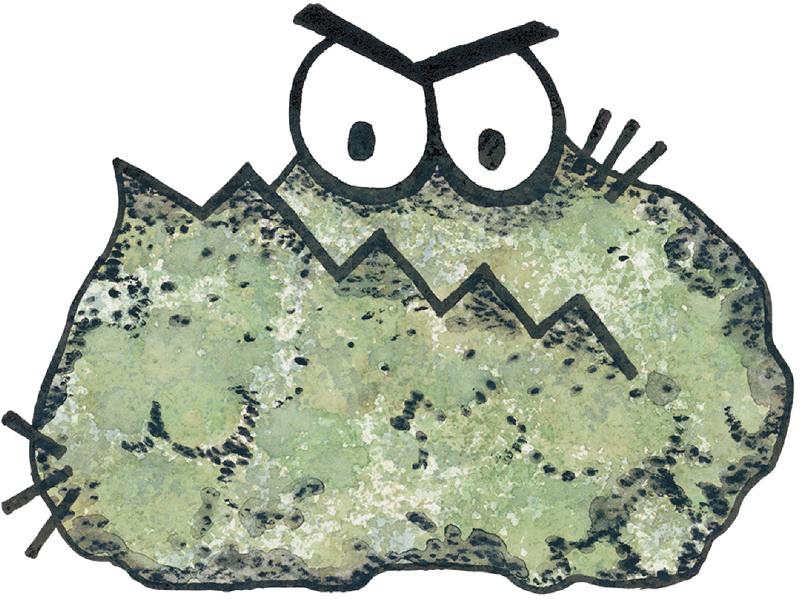 Mold-critter