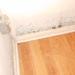 Mold When Closing on a Home